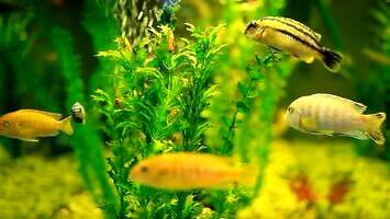 Dlaczego nie można trzymać ryb w kuli?