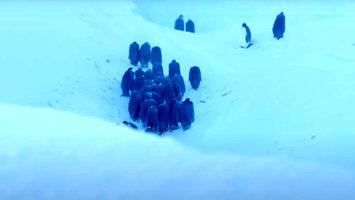 Ekipa filmowa ratuje pingwiny