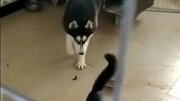 Kot pokazuje psu gdzie jest jego miejsce