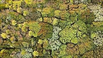 Ciekawe zjawisko - nieśmiałość koron drzew