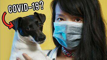 Czy zwierzęta domowe mogą zakazić się koronawirusem?