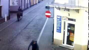 Nietrzeźwy na koniu w centrum Kielc