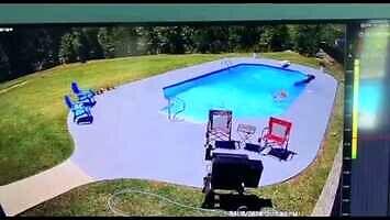 Dwa psy zaganiają krowę do basenu...