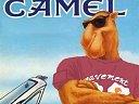 camel1010