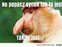 waffen_pl