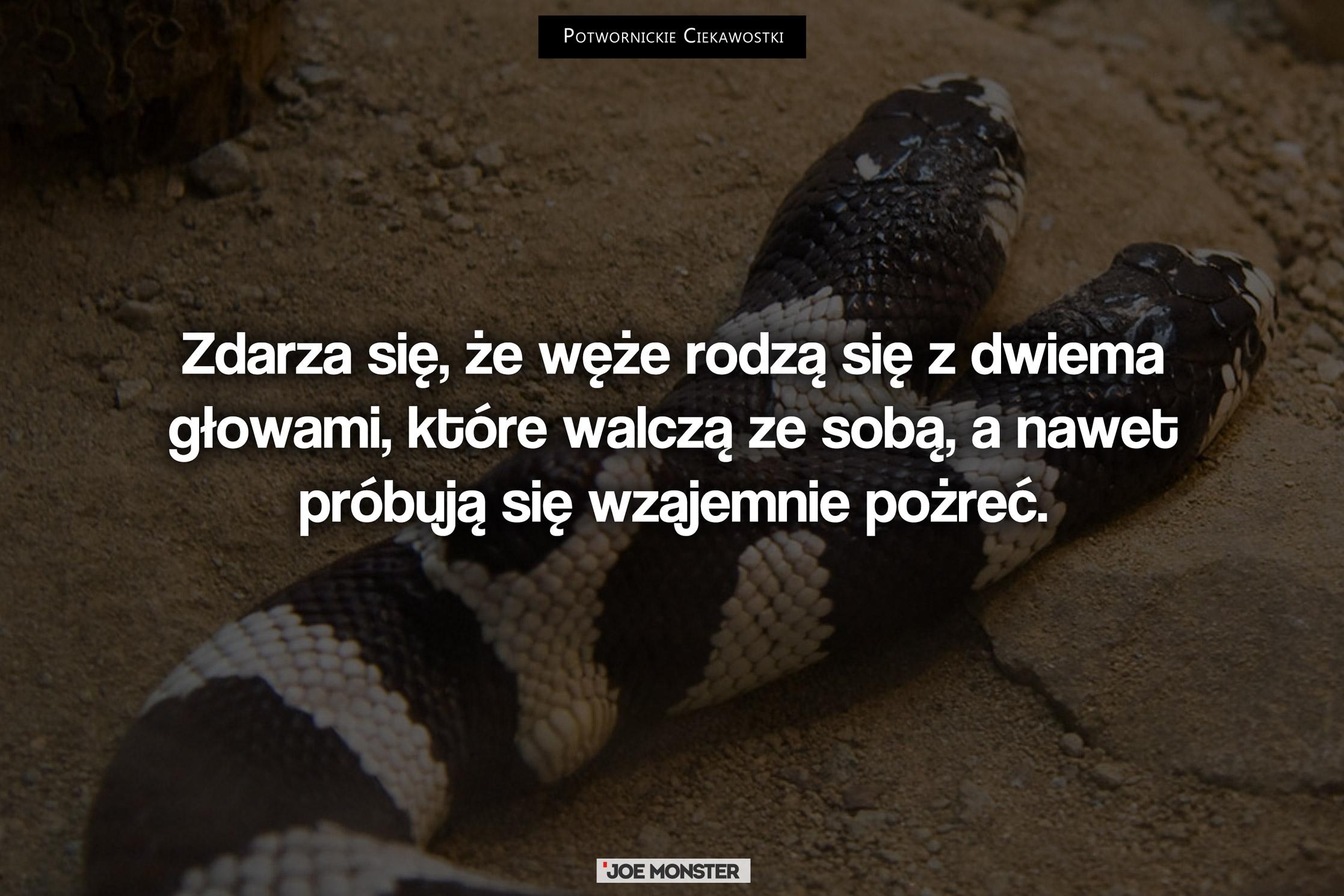 Zdarza się, że węże rodzą się z dwiema głowami, które walczą ze sobą, a nawet próbują się wzajemnie pożreć.