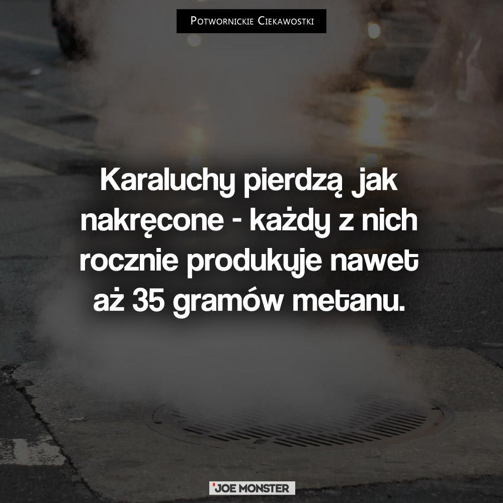 Karaluchy pierdzą jak nakręcone - każdy z nich rocznie produkuje aż 35 gramów metanu.