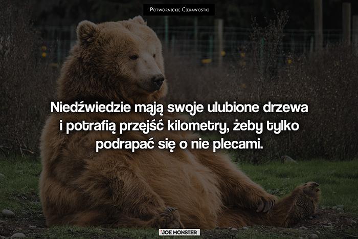 Niedźwiedzie mają swoje ulubione drzewa i potrafią przejść kilometry, żeby tylko podrapać się o nie plecami.