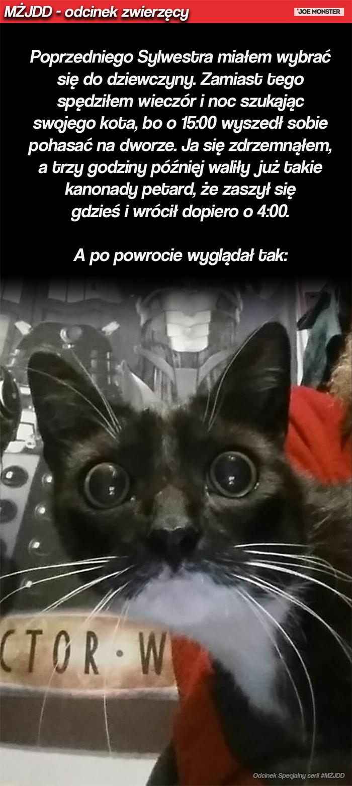 Poprzedniego Sylwestra miałęm wybrać się do dziewczyny. Zamiast tego spędziłem wieczór i noc szukając swojego kota, bo o 15:00 wyszedł sobie pohasać na dworze, ja się zdrzemnąłem, a trzy godziny później waliły już takie kanonady petard, że zaszył się gdzieś i wrócił dopiero o 4:00. A po powrocie wyglądał tak: https://vader.joemonster.org/upload/rhf/18099996040329980736125_29355822398.jpg