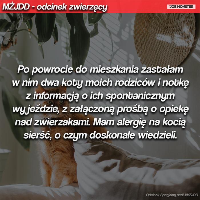 Po powrocie do mieszkania zastałam w nim dwa koty moich rodziców i notkę z informacją o ich spontanicznym wyjeździe, z załączoną prośbą o opiekę nad zwierzakami. Mam alergię na kocią sierść, o czym doskonale wiedzieli.