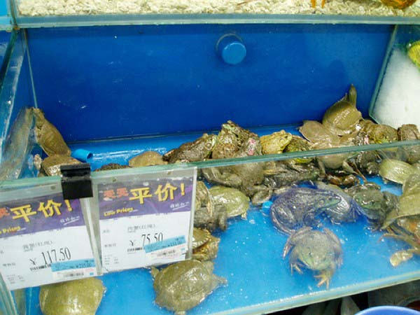 5.) Frogs 'n turtles