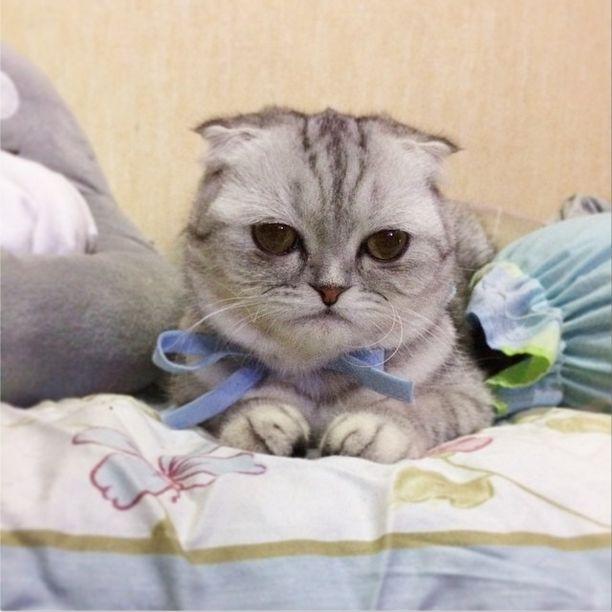 saddest_cat_12