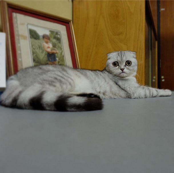 saddest_cat_06