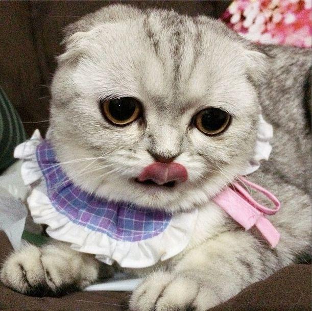 saddest_cat_20