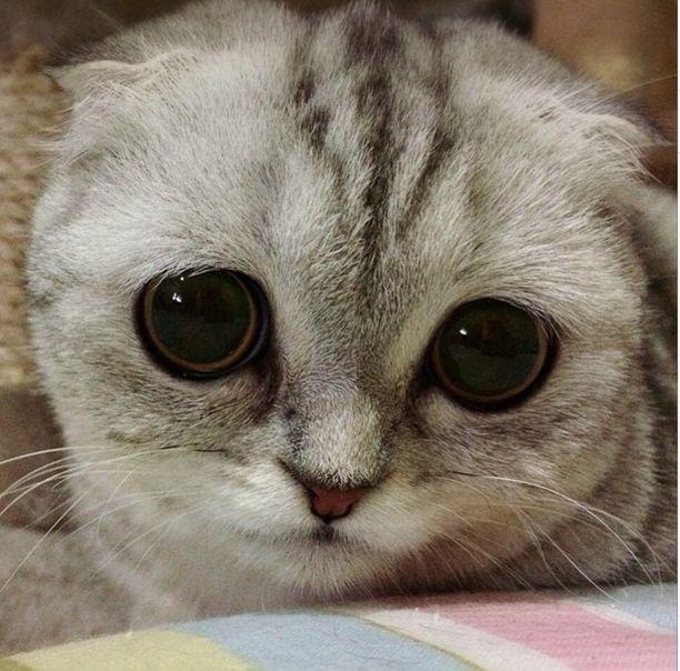 saddest_cat_28