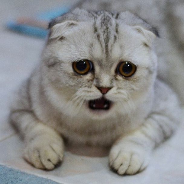 saddest_cat_01