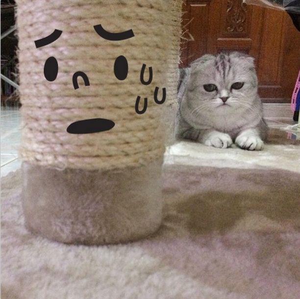 saddest_cat_29