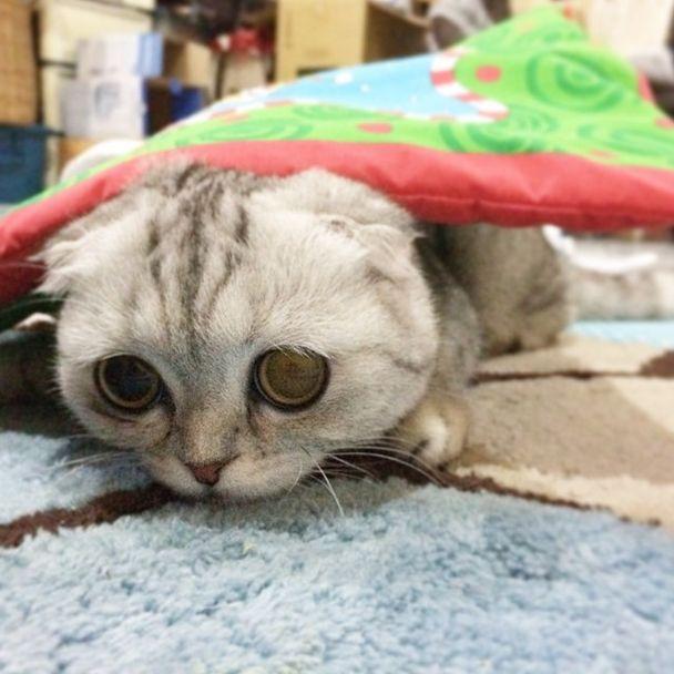saddest_cat_30