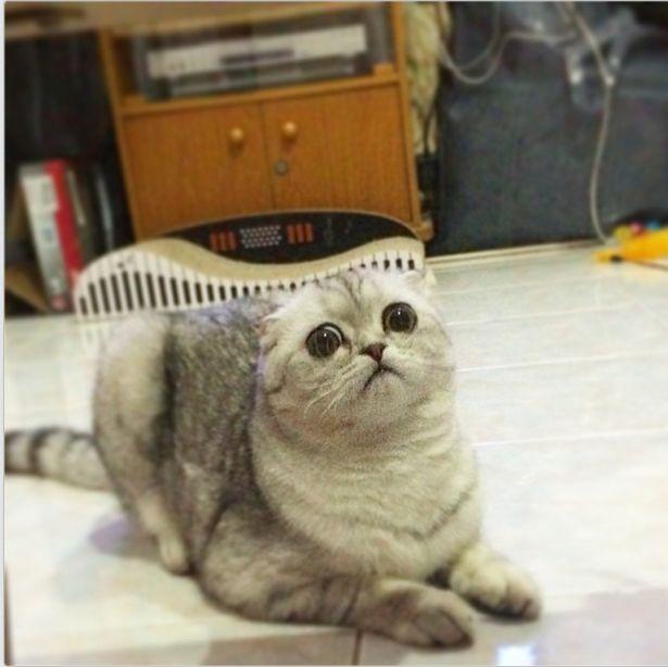 saddest_cat_32
