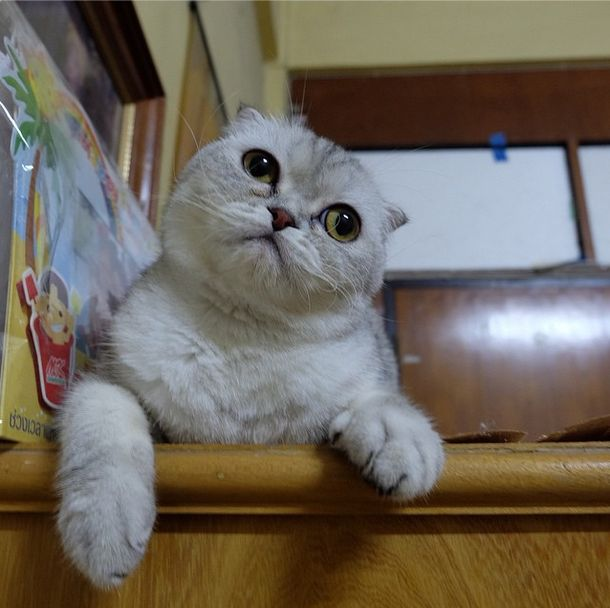 saddest_cat_03
