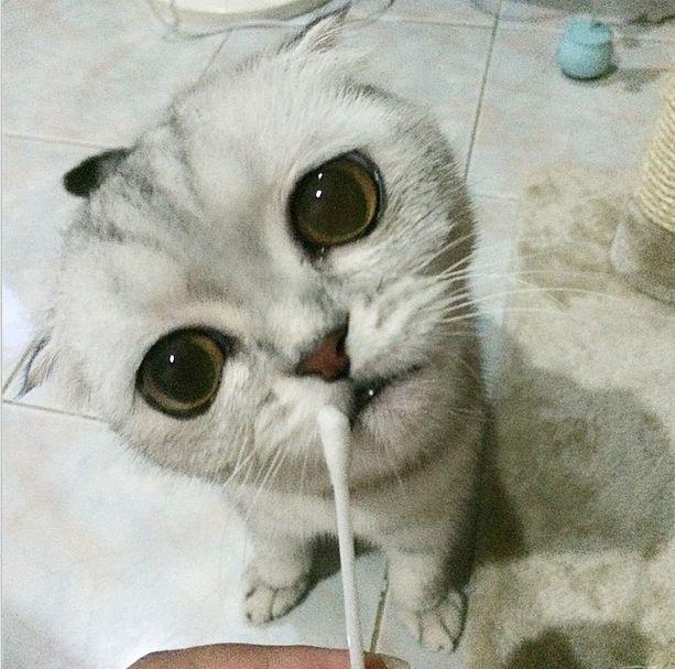 saddest_cat_17