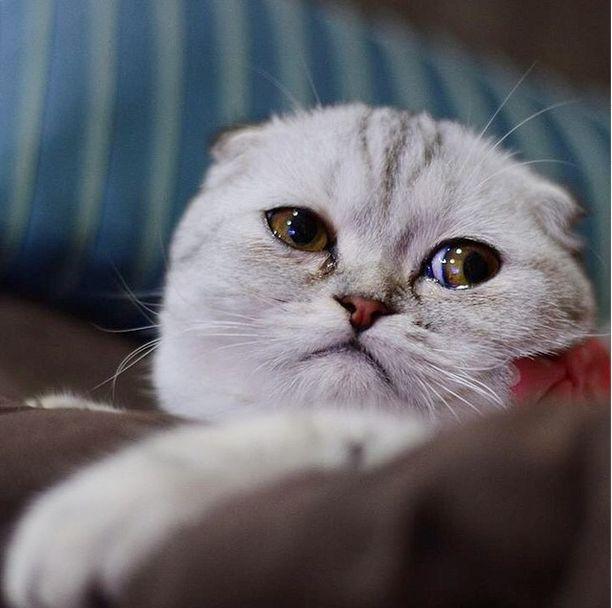 saddest_cat_14