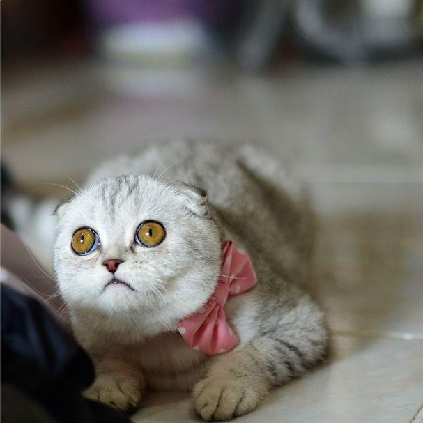 saddest_cat_24