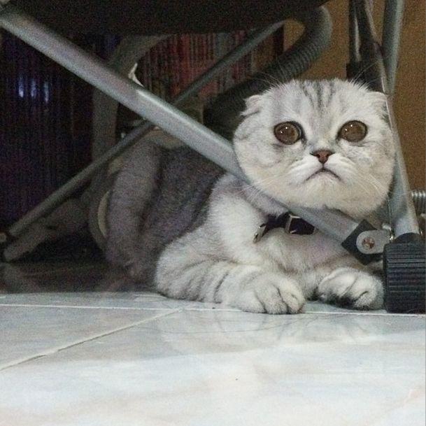saddest_cat_18