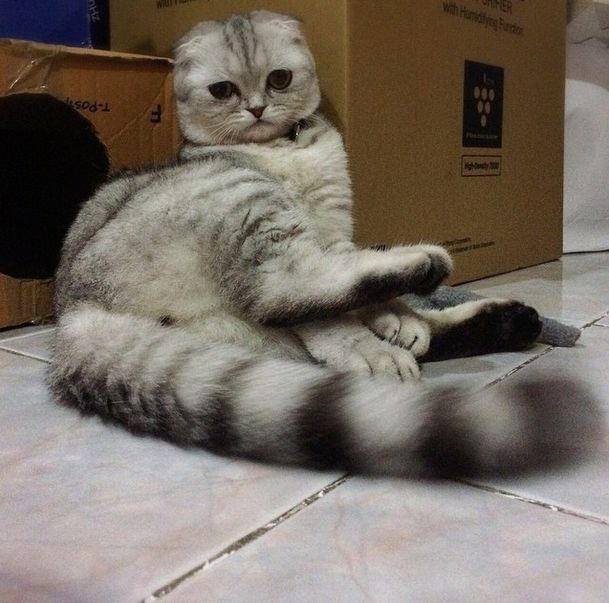 saddest_cat_26