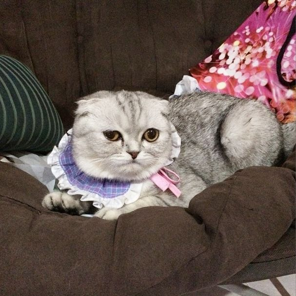 saddest_cat_15
