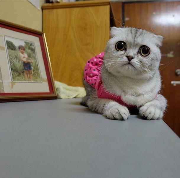 saddest_cat_08
