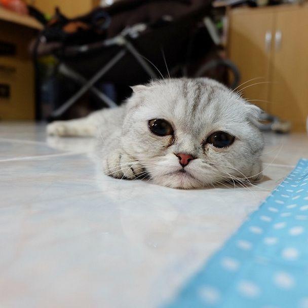 saddest_cat_11