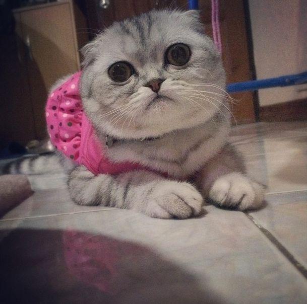 saddest_cat_27
