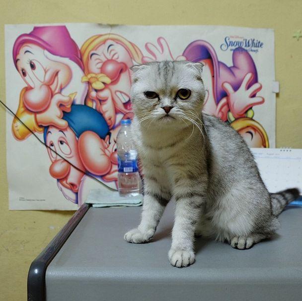 saddest_cat_04
