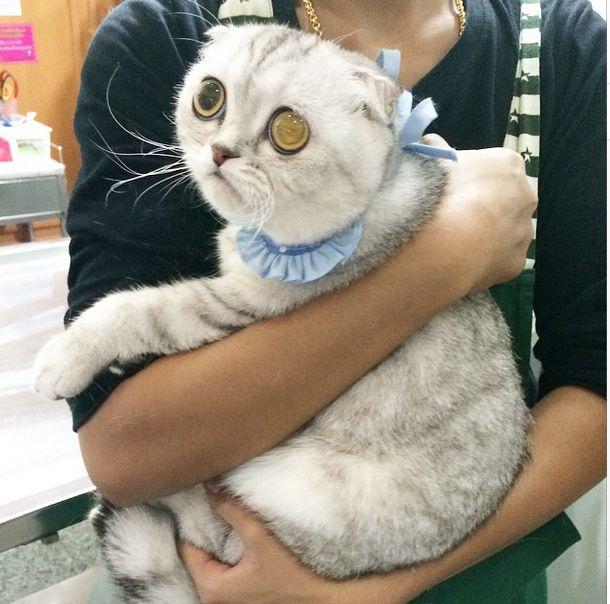 saddest_cat_13