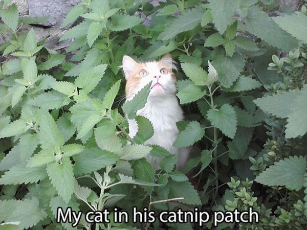 cat-nip-10