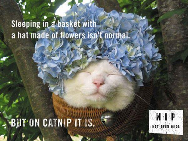 cat-nip-16