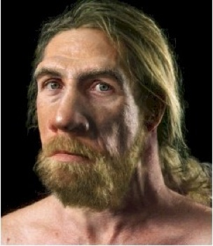 Adult Male Neanderthal