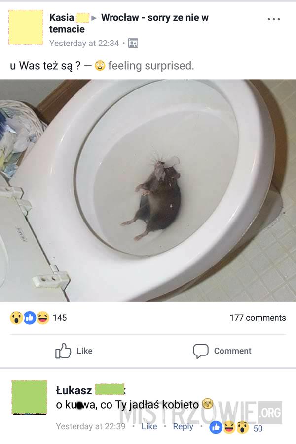 Szczur –
