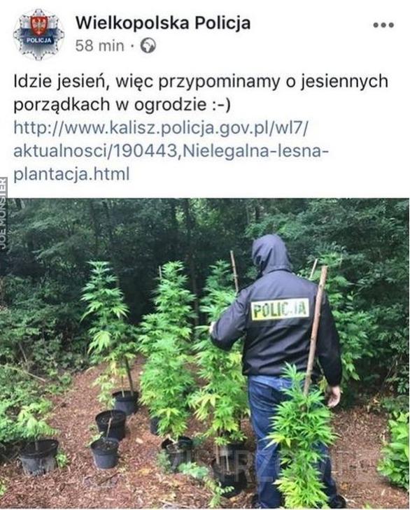 Wielkopolska policja –