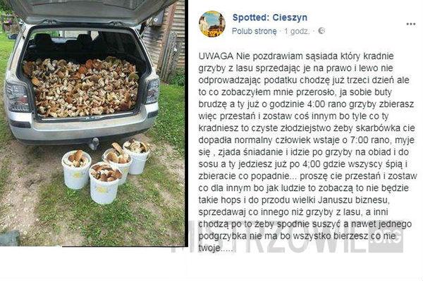 Kradnie grzyby z lasu –
