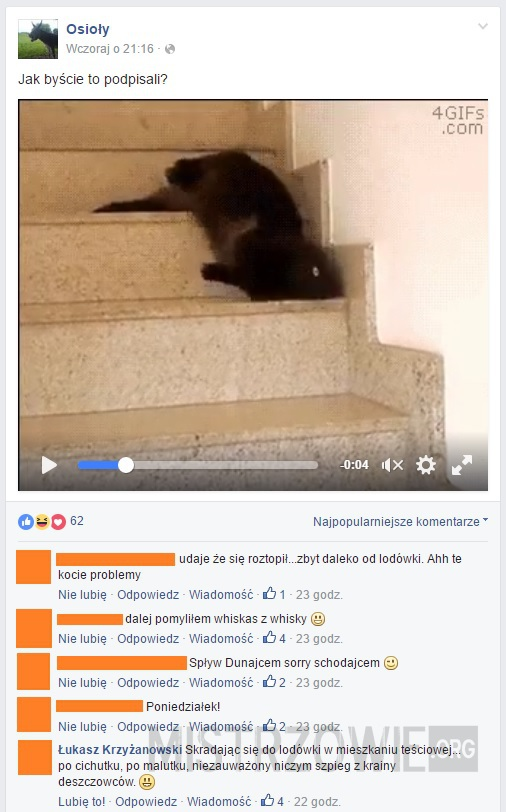 Kot używający schodów niezgodnie z przeznaczeniem –