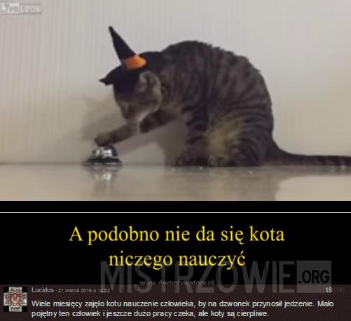 A podobno nie da się kota niczego nauczyć –