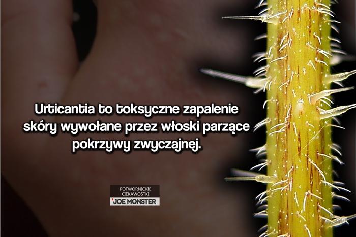 Urticantia to toksyczne zapalenie skóry wywołane przez włoski parzące pokrzywy zwyczajnej.
