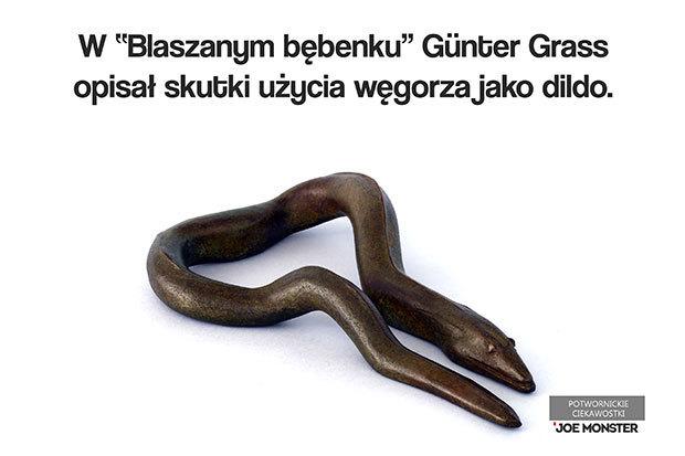 Günter Grass w Blaszanym bębenku opisuje skutki użycia węgorza jako akcesorium seksualnego.