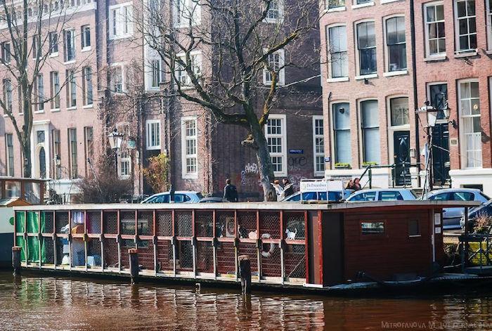 Ciekawostki na temat Amsterdamu - Joe Monster