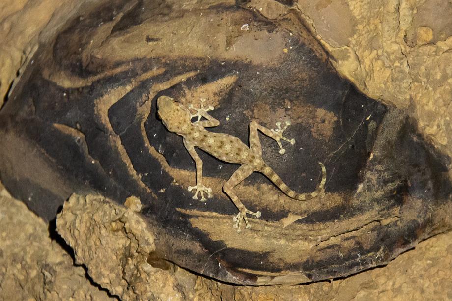 Misja Negew - zdjęcia z pustyni na Joe Monster.org