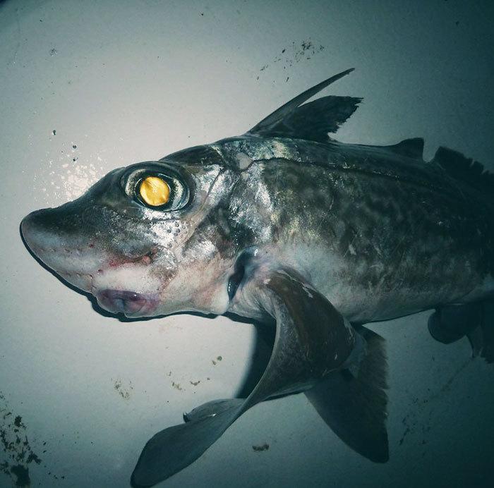 Najdziwniejsze stworzenia wyciągnięte z głębin morza