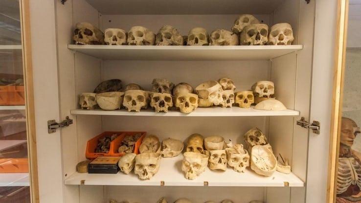 Skulls.jpg?q=50&fit=crop&w=738