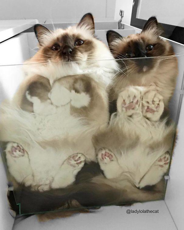 Koty, które rozlały się na tafli szkła